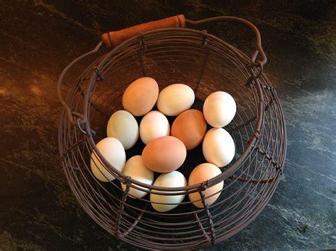backyard chicken eggs raising backyard chickens for dummies modern farmer