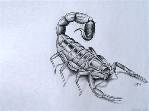 simple scorpion tattoo designs scorpion drawing at getdrawings free for