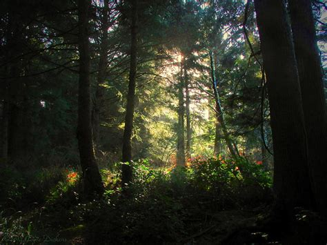 The Light In The Forest by The Light In The Forest Photograph By Joyce Dickens