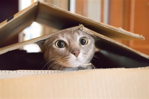 have an indoor adventure with your cat adventure cats