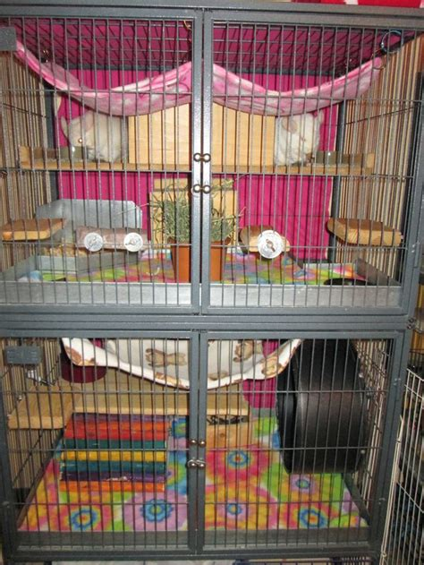 Ferret Nation Shelf Covers by Ferret Nation Cage 2 Level Housing Two Chinchillas With