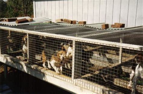 amish puppy mills ohio amish puppy mills exposed