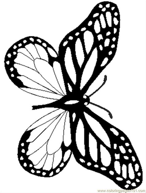 realistic butterfly coloring pages coloring pages monarchreal insects gt butterfly free
