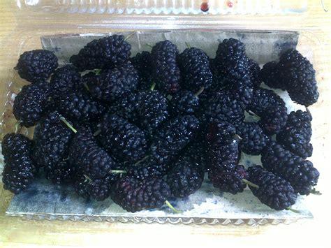 Benih Buah Raspberry Hitam Murah di ciwidey bandung harga blackberry hanya rp10 000 catatanku