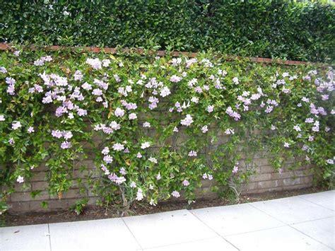 trumpet vine display on wall