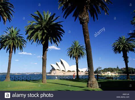 sydney trees palm trees sydney opera house sydney australia stock photo