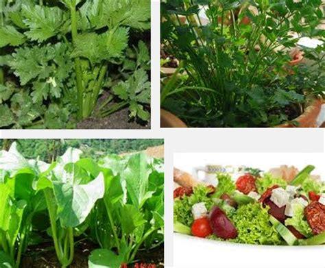 cara membuat salad sayur brokoli cara menanam sayuran salad cara menanam sayur fruit