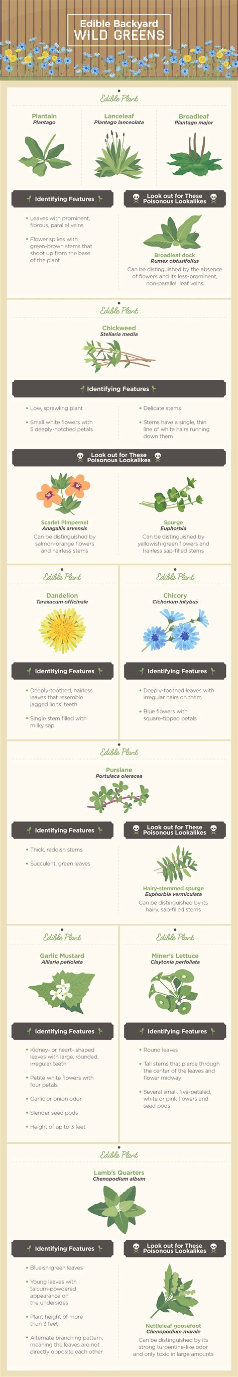 edible plants in your backyard backyard edibles american preppers network american