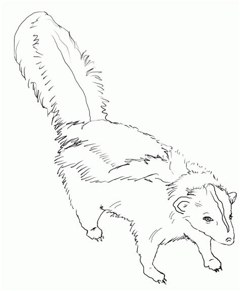 Coloring Page From Photo by Free Printable Skunk Coloring Pages For