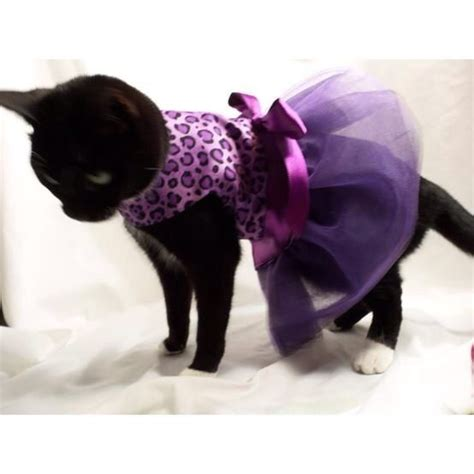 Dress Cat black cat wearing purple dress cat kittens wearing