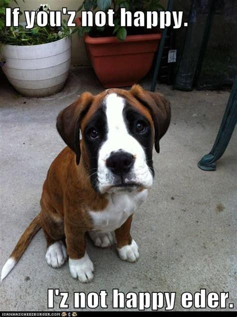Best Dog Memes - 5 best dog memes dogs and bark