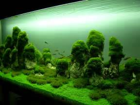 Aquascaping ushi kouge aquascaping