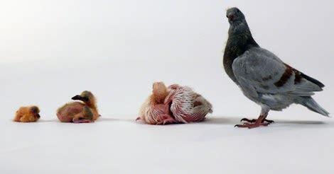 pertumbuhan  perkembangan hewan materi lengkap