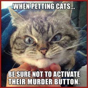 Crazy Cat Meme - crazy lady meme cat lady meme