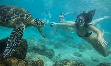 catamaran boat ride hawaii hawaii turtle tours up to 61 off honolulu hi groupon
