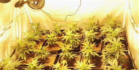 cultivos interior ventilaci 243 n en cultivos de marihuana interior