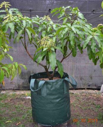 planter bag hijau 150 liter bibitbunga