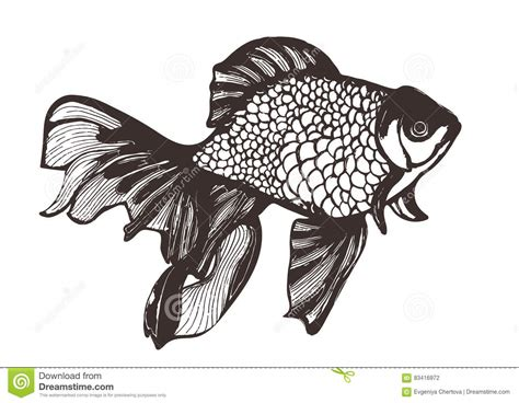 Helm Ink Lemon ink sketch fish vector cartoondealer 90265587