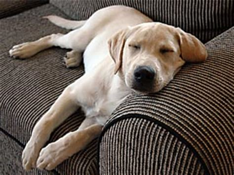 stop dog from getting on couch sick dog symptoms explained and how to stop it healthy