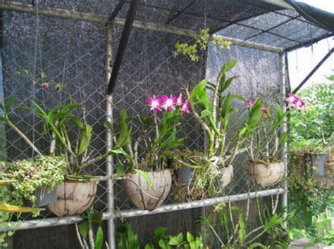 Jual Pot Gantung Sabut Kelapa cara menanam anggrek dengan sabut kelapa