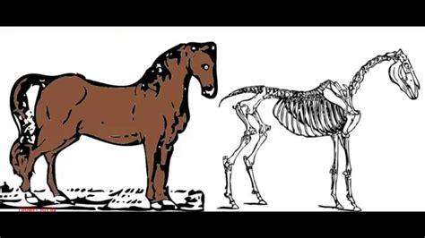 imagenes de animales vertebrados wikipedia los animales vertebrados e invertebrados youtube