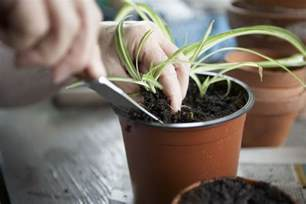 Home Design Decorating Games how to root plants from cuttings