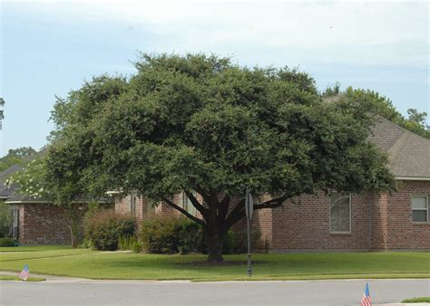 get it growing reduce utility bills with shade trees
