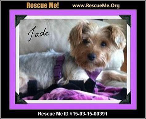 yorkie rescue ohio ohio yorkie rescue adoptions rescueme org