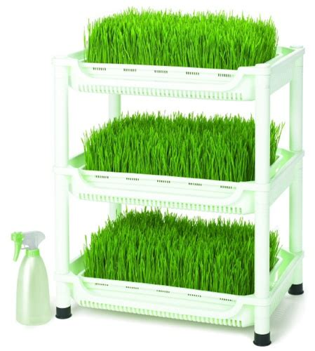 easy grow wheatgrass sproutman s wheatgrass grower soil free