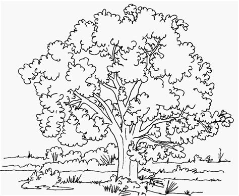 Baumhaus Für Erwachsene by Ausmalbilder Malvorlagen Baum Kostenlos Zum Ausdrucken