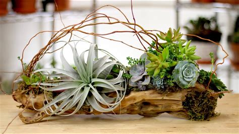 driftwood air plants succulents youtube