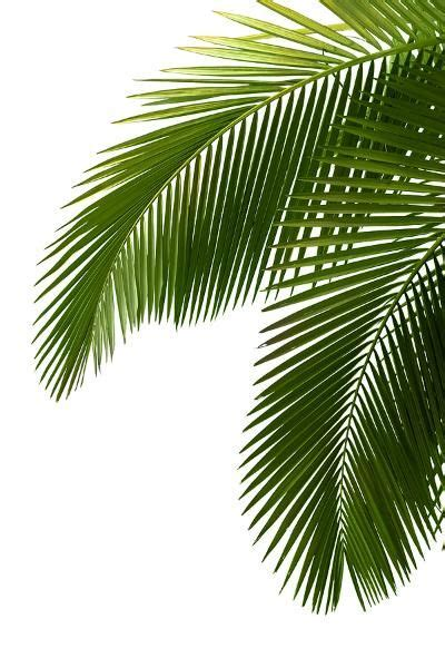 25 best ideas about palm palm tree leaves gardening guide