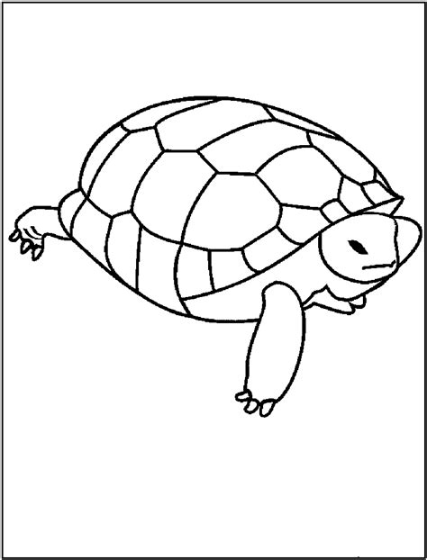 Free Printable Turtle Coloring Pages For Kids Turtle Coloring Pages Printable