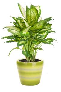 plants for low light indoor plants low light hgtv
