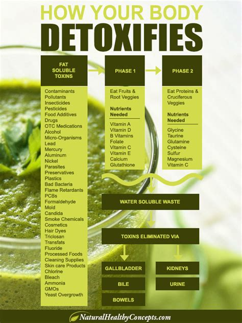 The Detox Guide by Announcing Our Step By Step Guide For A 7 Day Detox