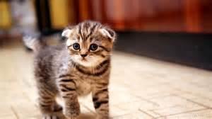 how long till kittens open their eyes