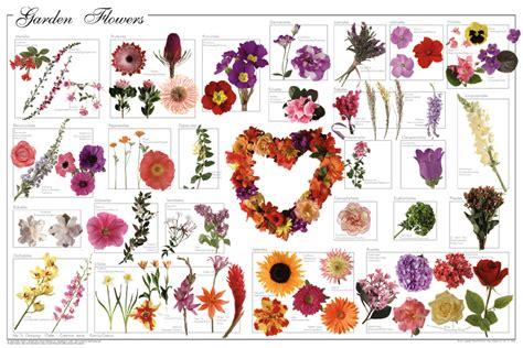 popular flowers for gardens garden flowers poster flower posters prints