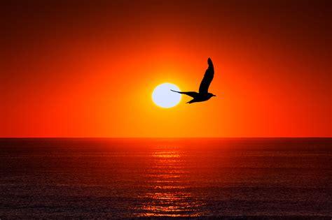 wallpaper sunset horizon bird silhouette  nature
