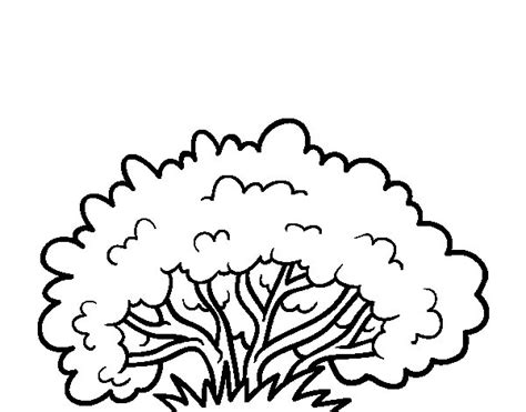 Coloring Pages Of A Bush