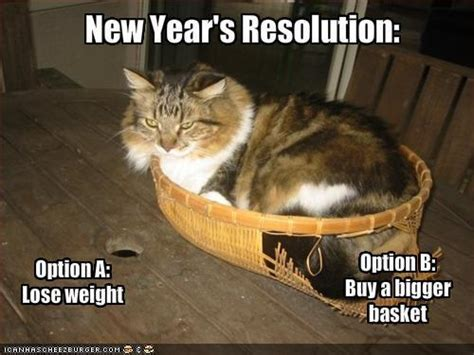 Happy New Year Cat Meme - animal humor images funny cats wallpaper and background