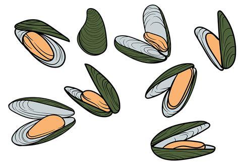 clipart vectors free mussel vector free vector stock