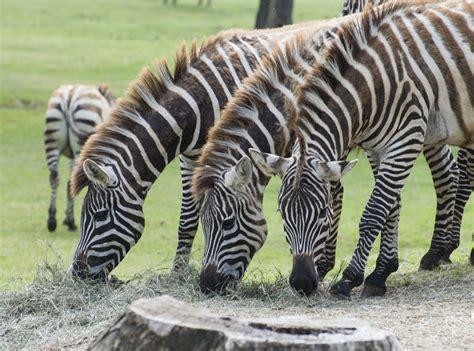 Safitri Syari safari park informazioni foto novit 224 e commenti