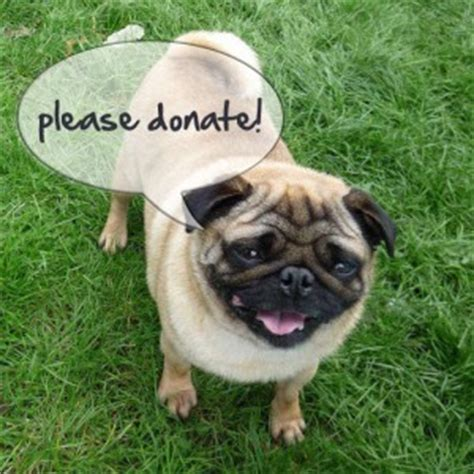 pug rehoming the pug welfare rescue association rescuing rehoming pugs throughout the uk