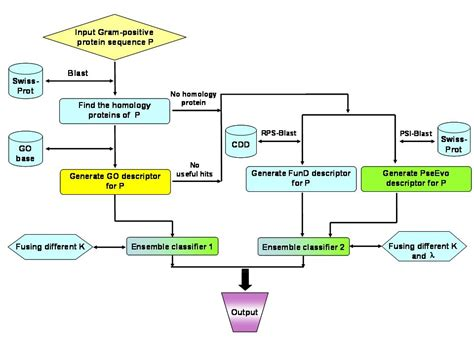 flowchart of how proteins are made in the cell proteins in a cell images