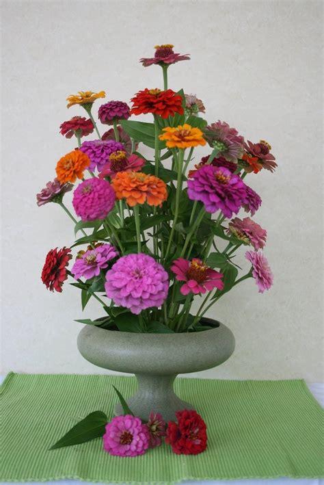 zinnia arrangements
