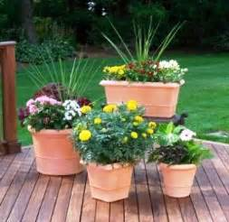 container garden ideas ideas for container gardening