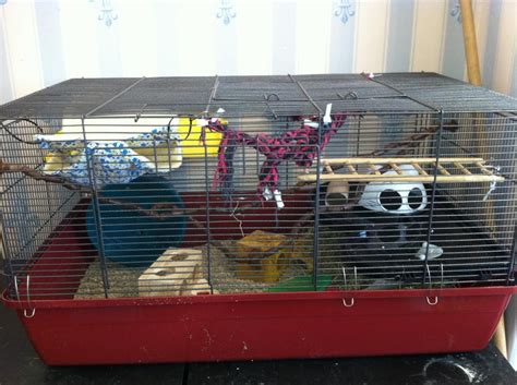 Kandang Hamster Hamster Cage Apple 10 perawatan harian terpenting untuk hamster okdogi