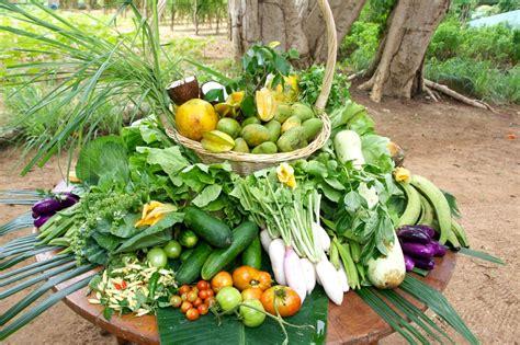 backyard vegetable garden design backyard vegetable garden design ideas nuevas the garden inspirations