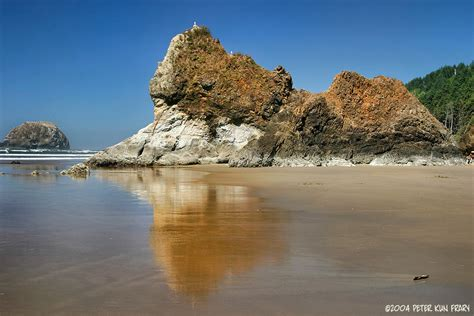 lone pine seastack arcadia beach or oregon coast