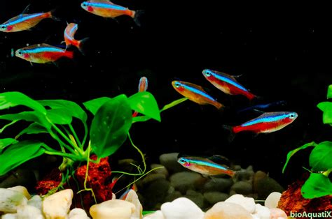 Jual Baby Arwana Kaskus aquascape 3 the fish from a memory